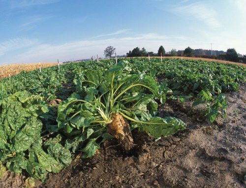 Nature's Principles: disrupting the plastics industry with sugar beets